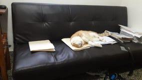 Katt som sover under affärstimmar royaltyfria bilder