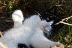 Katt som spelar i ängen Arkivbilder