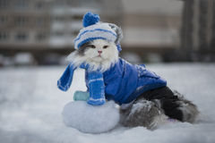 Katt som spelar i den frostiga dagen för snö royaltyfria bilder