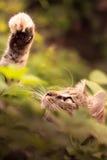 Katt som spelar i gräs royaltyfria bilder