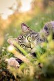 Katt som spelar i gräs royaltyfri bild