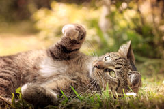 Katt som spelar i gräs arkivfoto