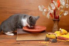 Katt som spelar med en flott mus Royaltyfri Fotografi
