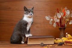 Katt som spelar med en flott mus Arkivfoto
