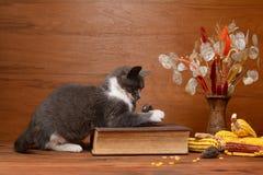 Katt som spelar med en flott mus royaltyfria foton