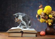 Katt som spelar med exponeringsglas Arkivbild