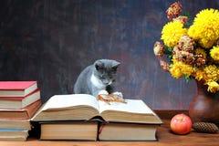 Katt som spelar med exponeringsglas Royaltyfri Fotografi