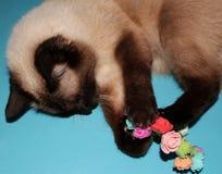 Katt som spelar med konstgjorda blommor fotografering för bildbyråer