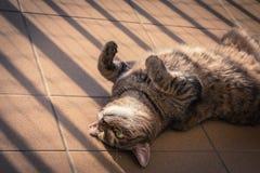 Katt som spelar på en balkong Arkivfoto