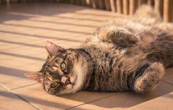 Katt som spelar på en balkong Fotografering för Bildbyråer