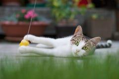 Katt som spelar på jordningen Arkivfoto