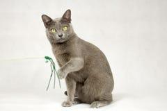 Katt som spelar på vit bakgrund Arkivfoto