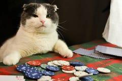Katt som spelar poker Arkivfoton