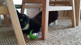 Katt som spelar wirhbollen arkivbilder