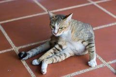 Katt som squating på väggen Royaltyfria Foton