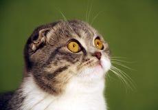 katt som stirrar upp Fotografering för Bildbyråer