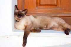Katt som ta sig en tupplur i Mojacar, Almeria, Spanien royaltyfri bild