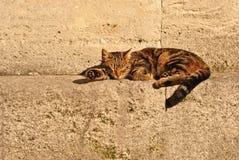 Katt som tar en ta sig en tupplur Royaltyfria Bilder