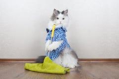 Katt som tvättar golvet i lägenheten arkivbilder