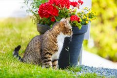 Katt som tycker sig om som är utomhus- Royaltyfri Fotografi