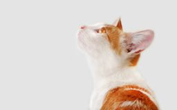 Katt som upp ser, med kuriositet, hopp Arkivfoto