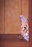Katt som ut bakifrån kikar ett hörn Arkivbild