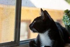 Katt som ut ser det uppåtriktade fönstret Arkivbild