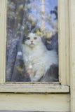 katt som ut ser fönstret Arkivbild