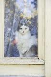 katt som ut ser fönstret Royaltyfri Foto