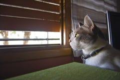 katt som ut ser fönstret arkivfoto