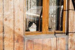 Katt som ut sitter och ser fönstret Arkivbilder