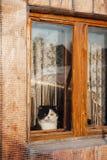 Katt som ut sitter och ser fönstret Arkivbild