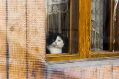 Katt som ut sitter och ser fönstret Fotografering för Bildbyråer