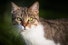 Katt som väntar på någon mat Royaltyfri Bild