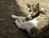 Katt som vilar på golvet arkivbild