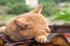 Katt som vilar på taket Arkivbild