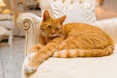 Katt som vilar på den lyxiga fåtöljen Arkivbilder