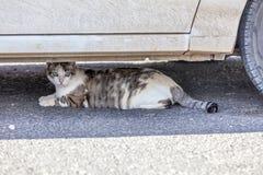 Katt som vilar under en bil i värmen royaltyfri fotografi