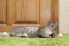 Katt som vilar upp katten på en soffa i färgrik suddighetsbakgrund, gulligt roligt kattslut, ung skämtsam katt på en säng, inhems Royaltyfria Foton