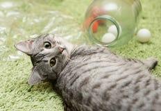 Katt som vilar upp katten på en soffa i färgrik suddighetsbakgrund, gulligt roligt kattslut, ung skämtsam katt på en säng, inhems Royaltyfria Bilder