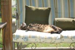 Katt sovande på middagar som sunning sig på glasverandan på lat eftermiddag Arkivbild