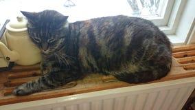 Katt sover Stock Photos
