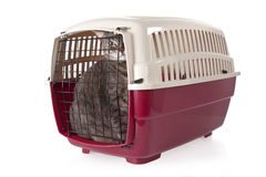 Katt stängd insidahusdjurbärare   Arkivbild