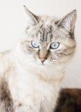 Katt stående Arkivfoton