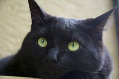 katt synad green Royaltyfria Foton