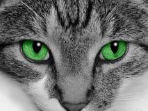 katt synad green Arkivbilder
