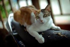 Katt Thailand arkivbilder