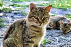 Katt-tiger Royaltyfri Fotografi