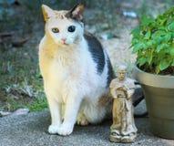 Katt-trädgård familjstående Arkivfoton