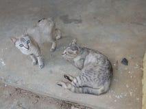 katt två Royaltyfri Bild